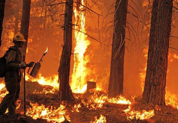 Más de 360 bomberos con ayuda de helicópteros y 41 camiones operativos intentaban controlar el fuego. (Notimex)
