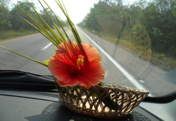 El hibisco (conocido como tulipán en Yucatán) tiene muchas propiedades curativas. (SIPSE)