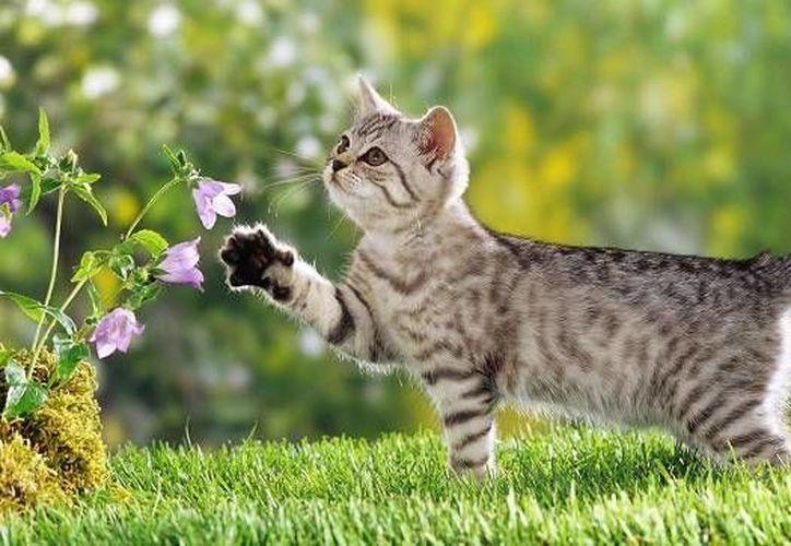 A ellos les gusta los lugares frescos, sobre todo al aire libre, disfrutan del patio y del jardín. (Redacción/SIPSE)