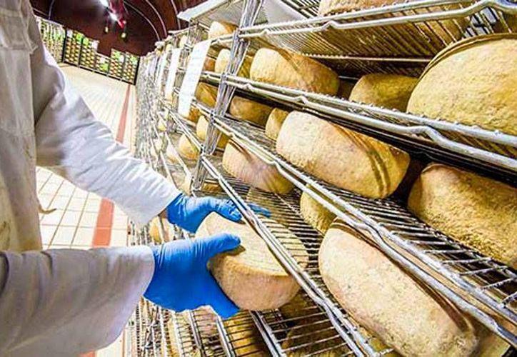 Una banda de contrabando internacional de quesos fue desarticulada por la policía de Rusia. La imagen es de contexto, y no corresponde al hecho. (elgolfo.info)