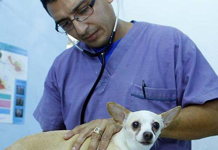 Ayer arrancó la Primera Semana Nacional de Vacunación Antirrábica Canina y Felina de 2014. (Milenio Novedades)