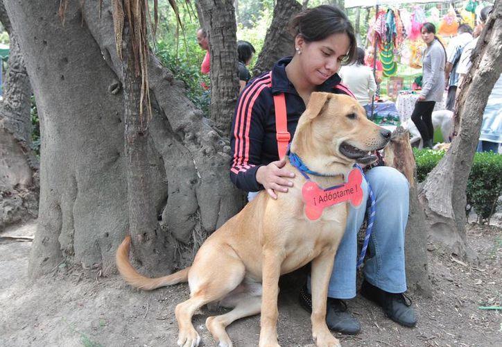 La póliza para mascotas Nuugi Pet Care está respaldada por la compañía Royal Sun Alliance. (Archivo/Notimex)
