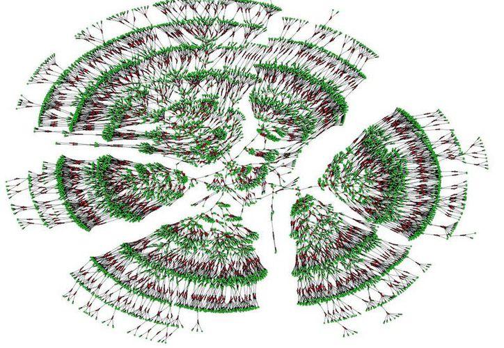 Los investigadores han usado este inmenso árbol genealógico para obtener más respuestas sobre el ser humano. (Foto: Universidad de Columbia).
