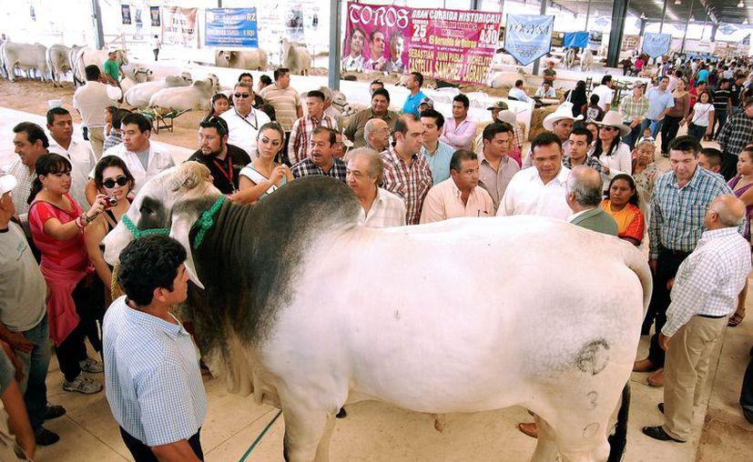 Con el millón adicional asciende a cuatro mdp el fondo de apoyo a ganaderos de Yucatán. (Cortesía)