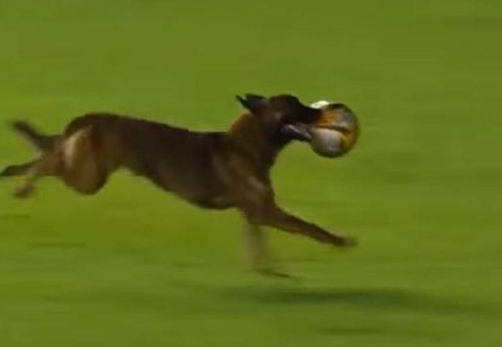 La 'jugada' del can futbolista duró cerca de un minuto, hasta que un jugador lo atrapó y un agente fue por él. (Foto: Captura)