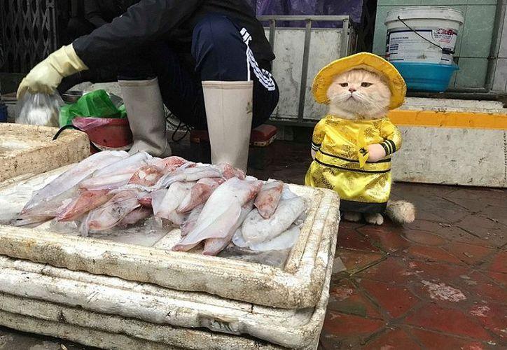 Llama la atención el tierno vestuario que el gato usa para vender pescado. (Foto: La República)