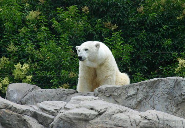 Los zoológicos deberán de cumplir con los criterios establecidos en la norma. (Redacción/SIPSE)