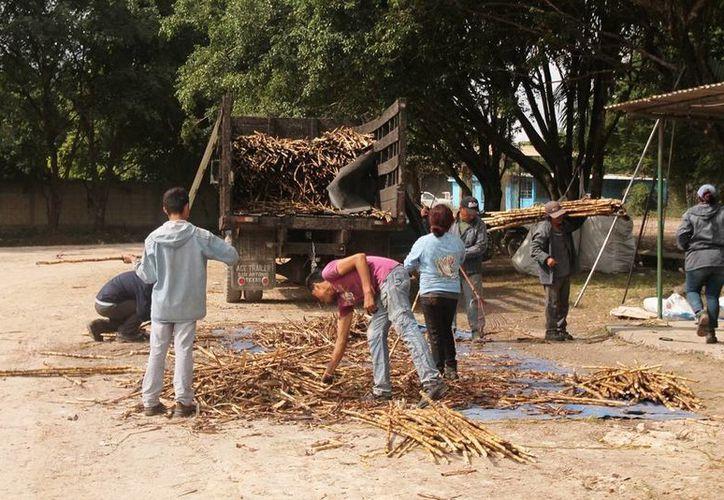 Este lunes se molieron seis mil 519.80 toneladas de caña. (Edgardo Rodríguez/SIPSE)