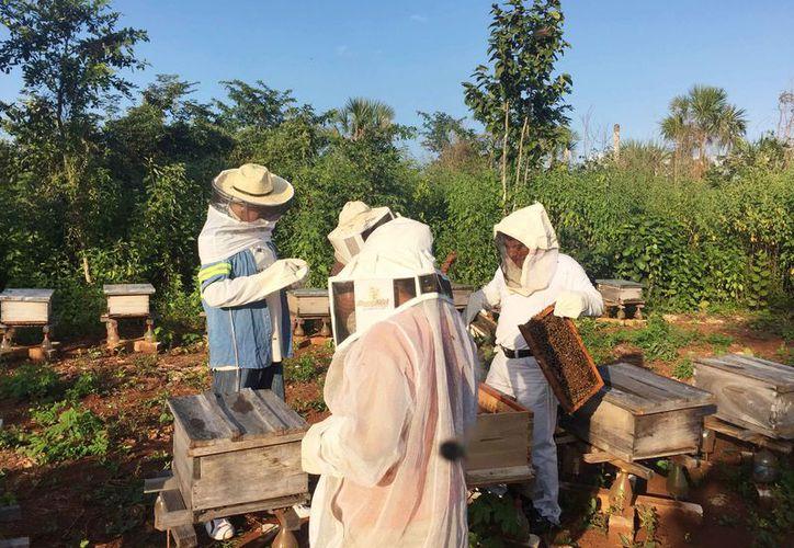 Los apicultores tratan de conseguir los permisos para poder exportar directamente. (Redacción/SIPSE)