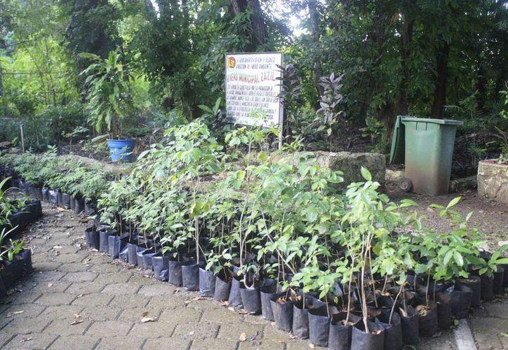 El programa de la Dirección de Ecología de Chetumal busca reforestar todas las escuelas de nivel básico. (Harold Alcocer/SIPSE)