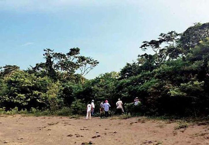 Integrantes del colectivo revisan un predio en Colinas de Santa Fe, en Veracruz. (Isabel Zamudio/Milenio)