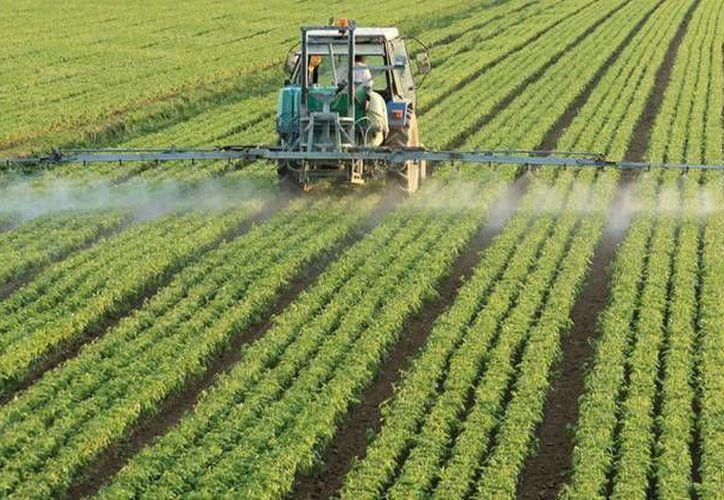 El herbicidas de Monsanto es usado en los campos de soja transgénica del estado brasileño de Río Grande do Sul. (bioego.hu)