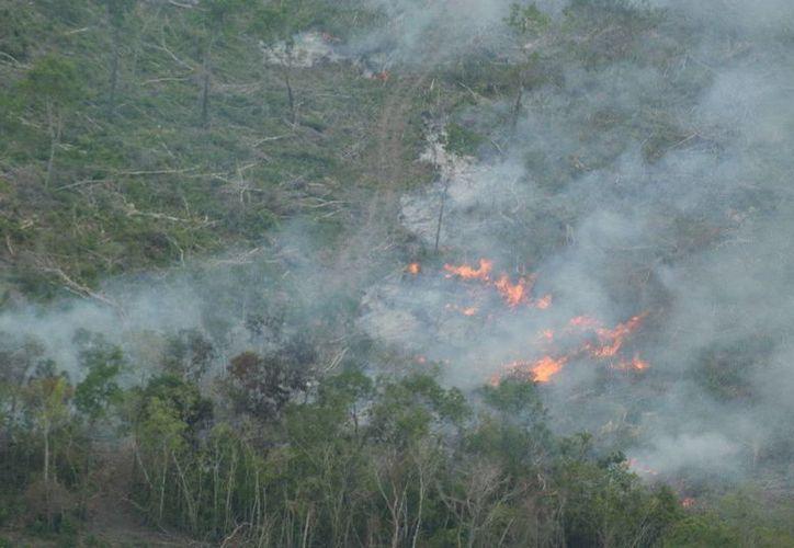 En lo que va de la temporada se han extinguido 13 incendios forestales. (Cortesía/SIPSE)