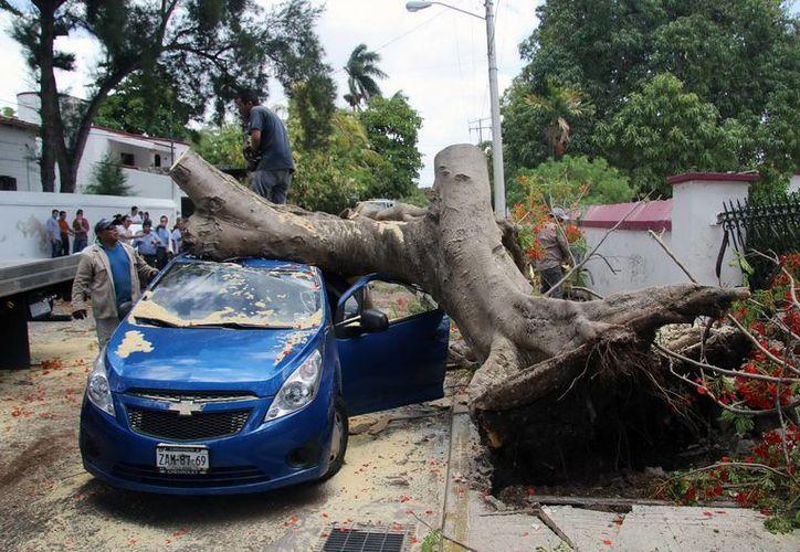 Imagen del un auto Chevrolet Spark que quedó destrozado debajo de un árbol de  flamboyán. (Jorge Pallota/SIPSE)