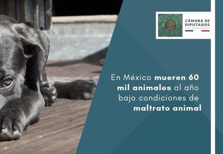 Incrementa el maltrato a los animales en México. (diputados.gob.mx)