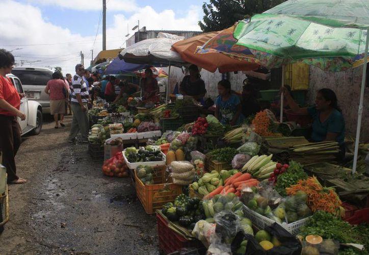 Con estas actividades los campesinos tendrán un apoyo extra ante la situación económica actual. (Harold Alcocer/SIPSE)