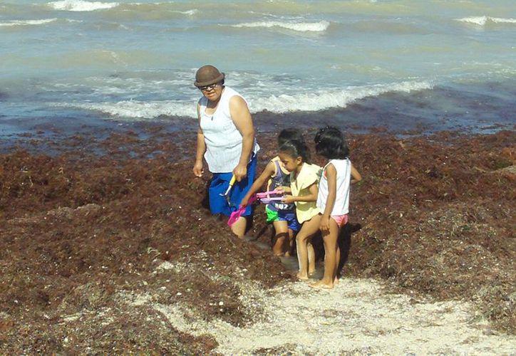 María del Carmen Aguilar, en compañía de sus nietas, retiró a mano capas de sargazo para llegar al mar. (Manuel Pool/SIPSE)