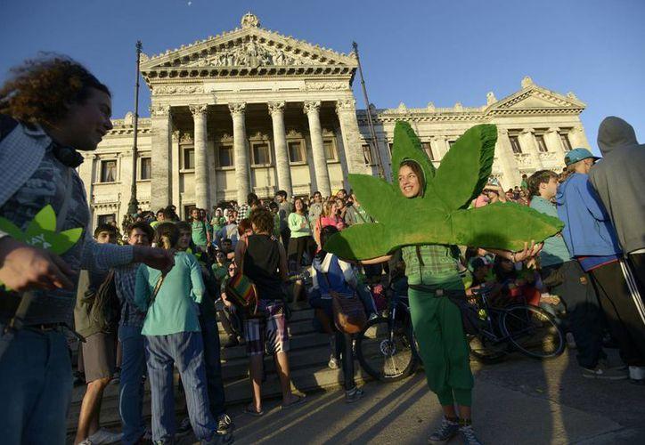 El presidente de Uruguay propuso la legalización de la marihuana como una forma de combate al narcotráfico. La norma fue aprobada este martes por el Senado de aquel país. (Agencias)