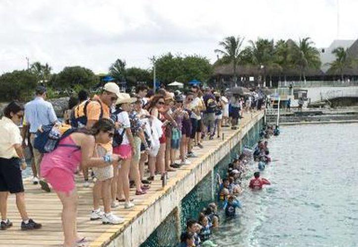Agentes de viajes disfrutaron del nado interactivo con delfines. (Lanrry Parra/SIPSE)