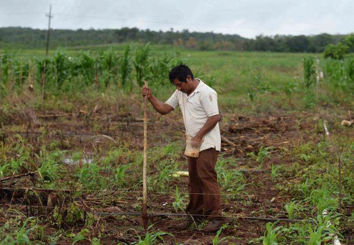 Benjamín Ruperto García, habitante de San Isidro, señaló que resulta casi igual comprar los productos a producirlos. (Carlos Castillo/SIPSE)
