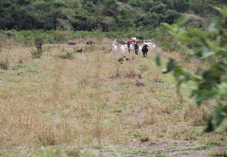 Ya tiene medio año que lo ganaderos pagaron, sin que les hayan entregado el producto. (Carlos Castillo/SIPSE)