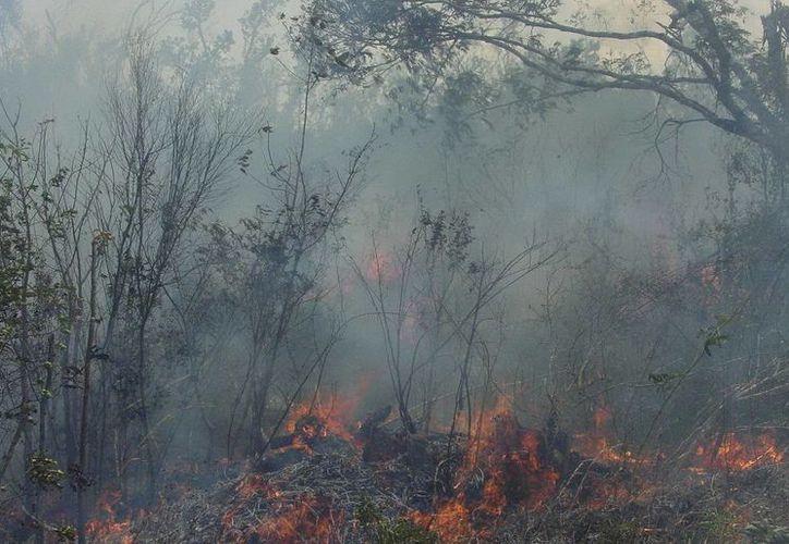 Una superficie de 4 millones 732 mil hectáreas se encuentran en peligro de ser siniestradas. (Redacción/SIPSE)