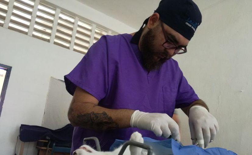 Este fin de semana se realizará una campaña de esterilización de mascotas en Bacalar. (Javier Ortiz/SIPSE)