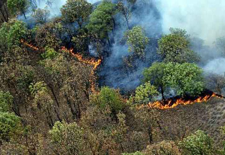 El incendio en el bosque de 'La Primavera' inició el martes pasado. (La Jornada)