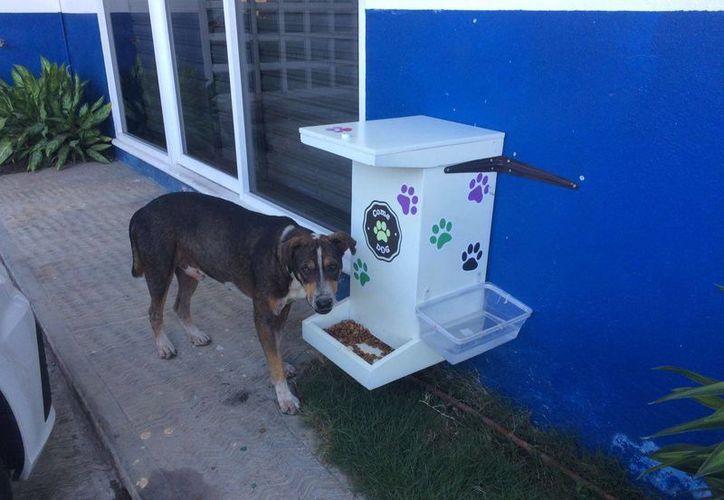 Jóvenes de Felipe Carrillo Puerto pretenden instalar 16 comedores para perros en su localidad. (Jesús Caamal/SIPSE)