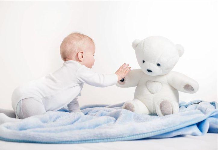 """""""Teddy the Guardian"""" tiene que pasar el proceso al que lo sometieron para recibir certificaciones y autorizaciones oficiales.(teddytheguardian.com)"""