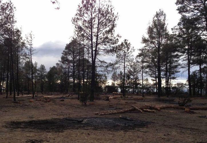 Solo el 3% de los incendios forestales que ocurren en México se deben a causas naturales. (Archivo/Notimex)