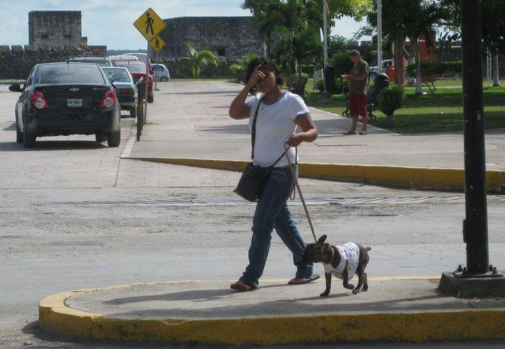 La fauna callejera ha incrementado en la cabecera municipal, lo que afecta la imagen del destino. (Javier Ortiz/SIPSE)