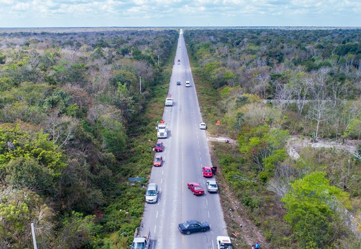 Consideran necesario evaluar los posibles impactos ambientales que tendrá el Tren Maya. (Daniel Tejada/SIPSE)