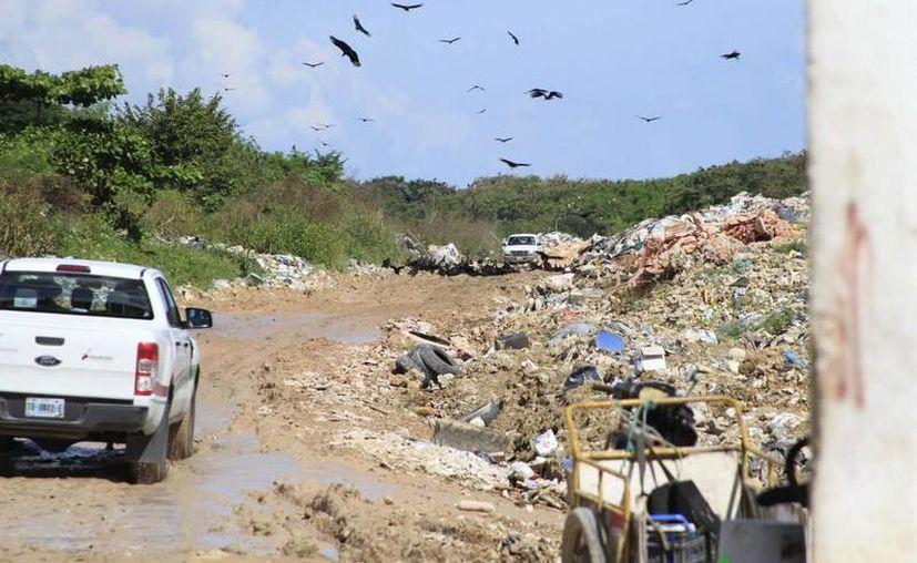 En el lugar no se encontraron casquillos percutidos e indican que el sujeto fue asesinado y después trasladado hasta el basurero clandestino. (SIPSE)