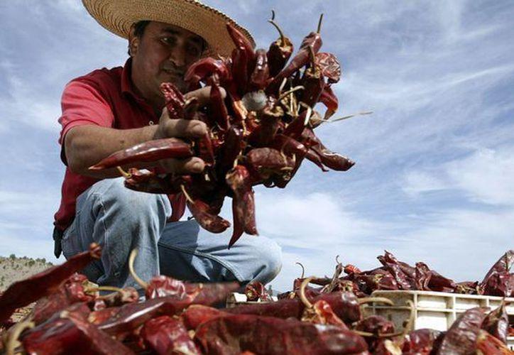 México es el principal productor de chiles en el mundo. (EFE)