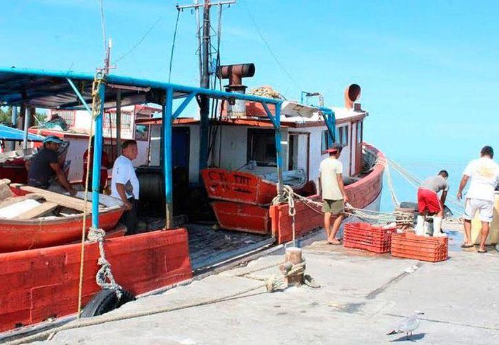 Sólo 3,500 de los 6,000 pescadores cuentan con el llamado Seguro del Mar, un programa que apoya económicamente a familiares que pierden a un ser querido en alta mar. La imagen es de contexto. (Óscar Pérez/SIPSE)
