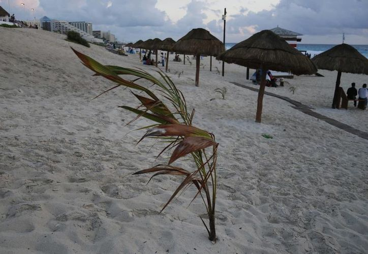 Mencionan que existe personal para darle mantenimiento a las palmeras. (Israel Leal/SIPSE)