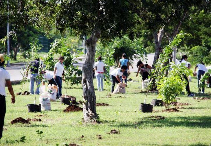 La reforestación de la colonia La Guadalupana se realizará el próximo viernes. (Imagen ilustrativa/ Archivo SIPSE)