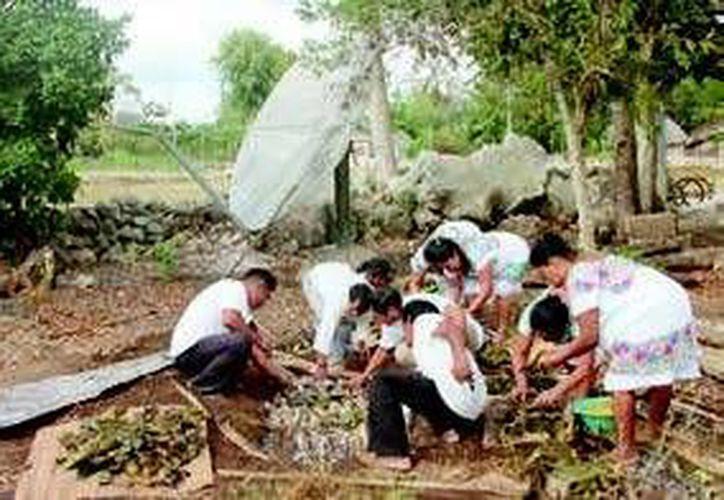 Habitantes de comunidades de la zona rural participan en talleres, que los ayudan a fomentar una cultura del vital líquido. (Redacción/SIPSE)