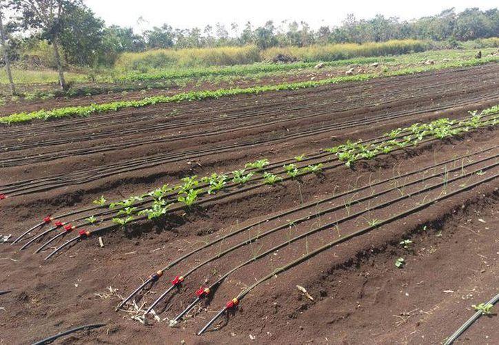 Solicitan a los productores que se registren  para tener un control sobre el aprovechamiento del agua en la entidad. (Benjamin Pat/SIPSE)