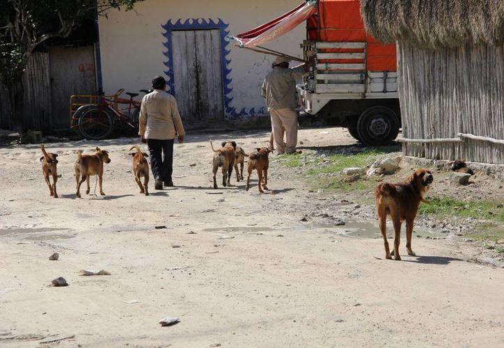 La mayoría de los dueños permiten que sus mascotas deambulen en la vía pública. (Rossy López/SIPSE)