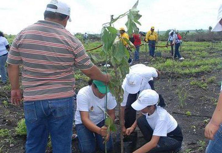 Se busca que los municipios implementes acciones en pro del medio ambiente y el cambio climático. (Cortesía/SIPSE)