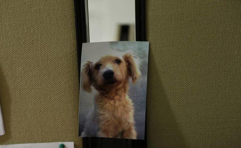 Las víctimas del robo de sus mascotas se apoyan de las redes sociales para localizarlas. (Israel Leal/SIPSE)