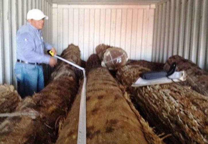 Elementos de la Profepa aseguraron la madera de la especie Granadillo que estaban dentro de los contenedores. (Milenio Novedades)