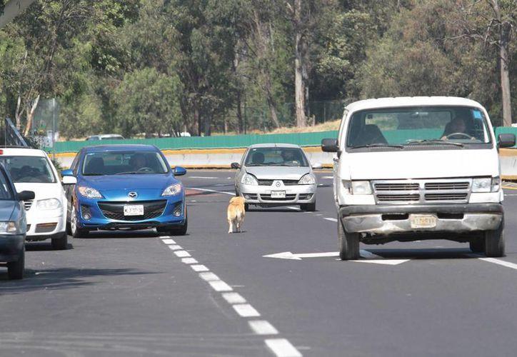 La SCT anunció proyectos de modernización para otros tramos carreteros del estado de Michoacán. (Notimex/Archivo)
