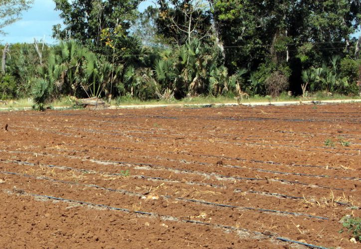 La deforestación es la principal causa del cambio climático. (Foto: Milenio Novedades)