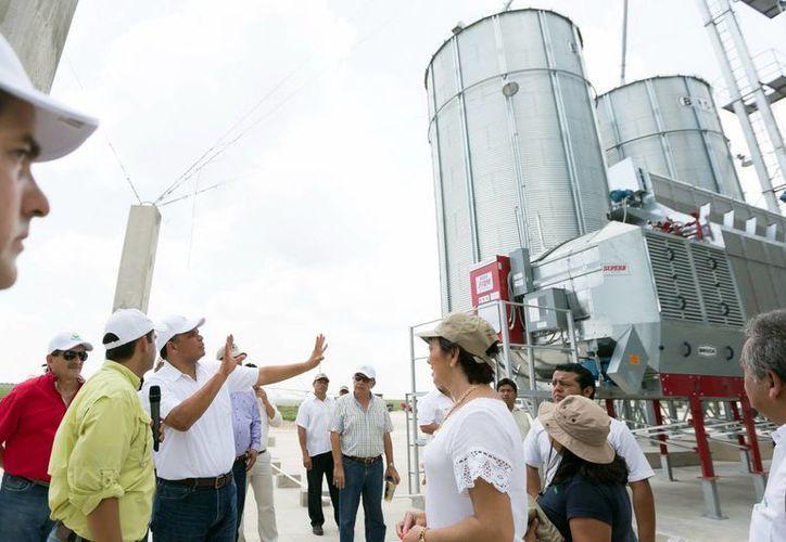 """El gobernador Rolando Zapata Bello realizó una  visita en la Unidad de Producción de Maíz """"Paknal"""",  ubicada en Tizimín. (Milenio Novedades)"""