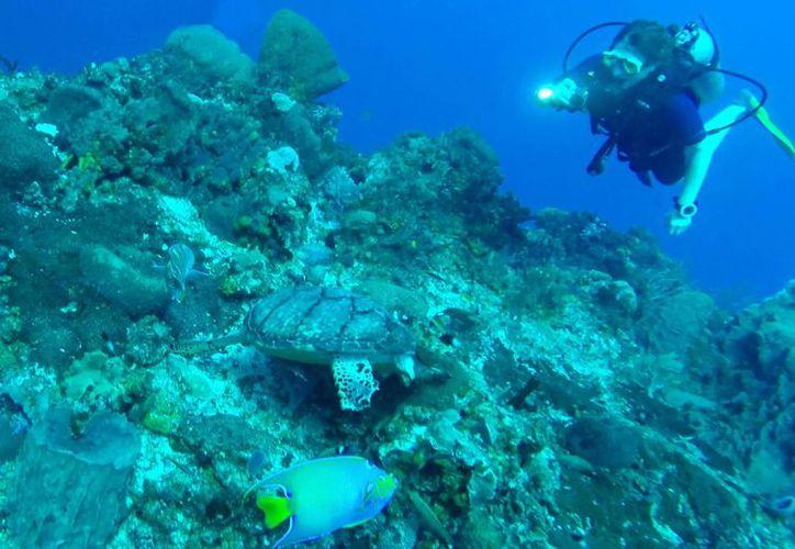 La gran biodiversidad marina de Akumal atrae a investigadores de todo el país y el mundo. (Jesús Tijerina/SIPSE)