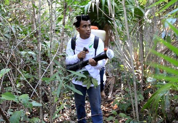 Invierten más de seis millones de pesos y se atienden cinco reservas naturales protegidas. (Juan Rodríguez/SIPSE)