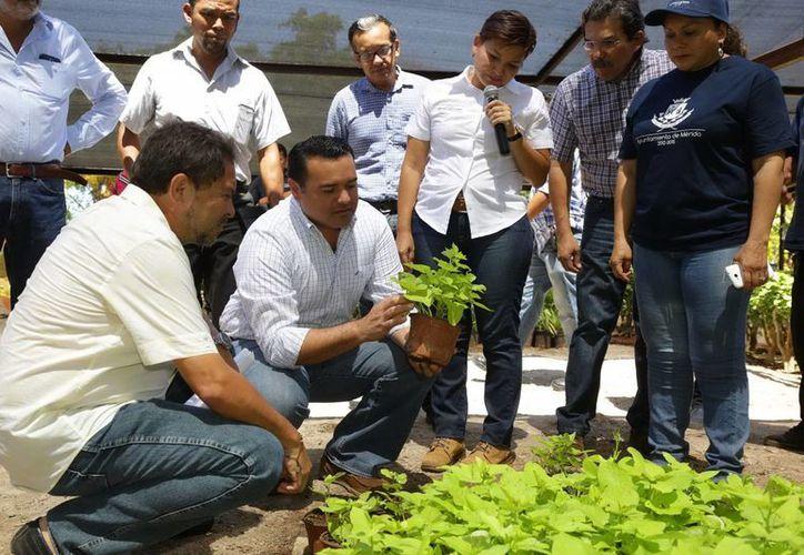 El alcalde meridano Renán Barrera en una visita de inspección al Vivero Municipal, al que se le ha hecho una importante inversión. (Cortesía)